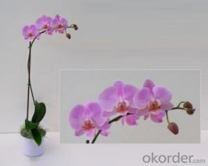 Purple Butterfly Orchid Solar Flower Garden Light