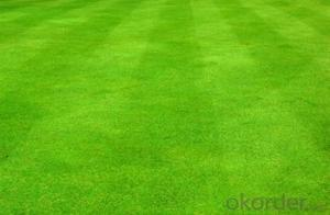 Artificial Pet Grass  Environmental Hot and Best Sell in China