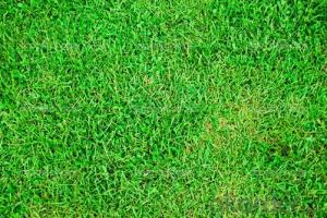 Artificial Grass, Pet Friendly Artificial Grass,Tennies Grass Best Sell in China