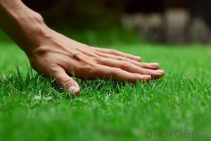 Artificial Grass or turf for Decoration with PP