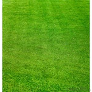Garden Landscaping Artificial Grass Plant Direct