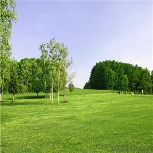 Outdoor Garden Used 35mm Height and V Shape Artificial Grass