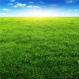 New Natural Landscaping Grass Artificial Grass for Garden