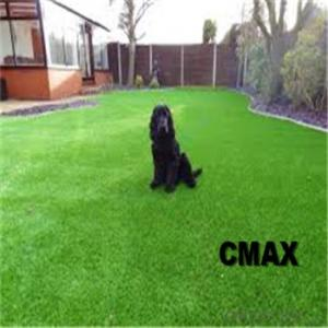 Pets playing yard laying grass artificial lawn