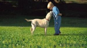 Safe and reliable artificial lawn for pets