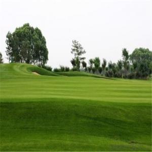 Artificial  Grass/Golf  Putting Green