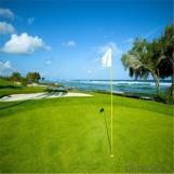 Golf Sport Court Artificial Grass/Golf Turf