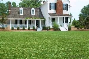 Stem fiber Artificial Grass for landscaping/garden or football
