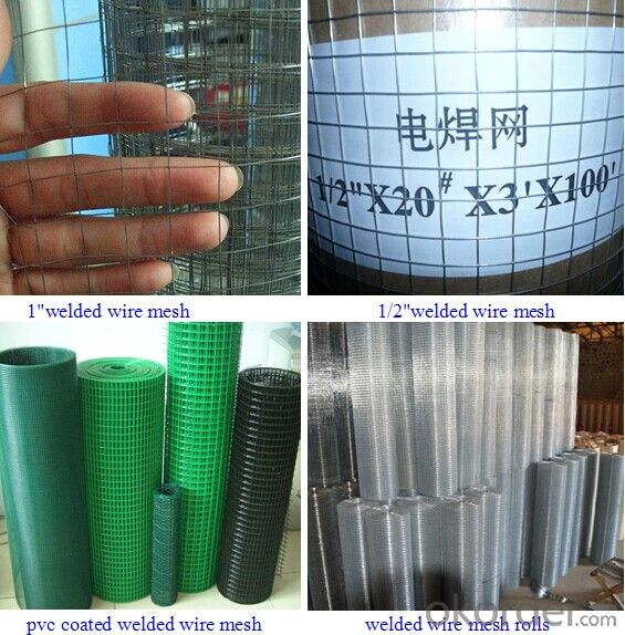 Search Competitive Price galvanized/pvc coated Welded Wire Mesh(ISO9001 factory)