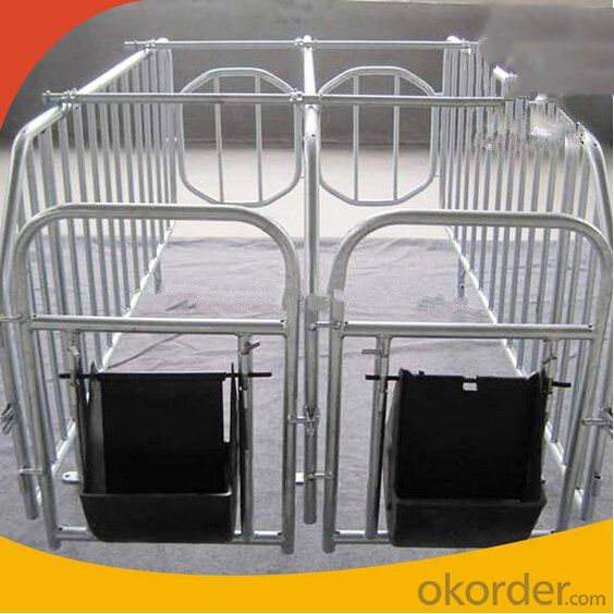 Galvanized Gestation Stall for Pigs before Farrowing(2 Booths)