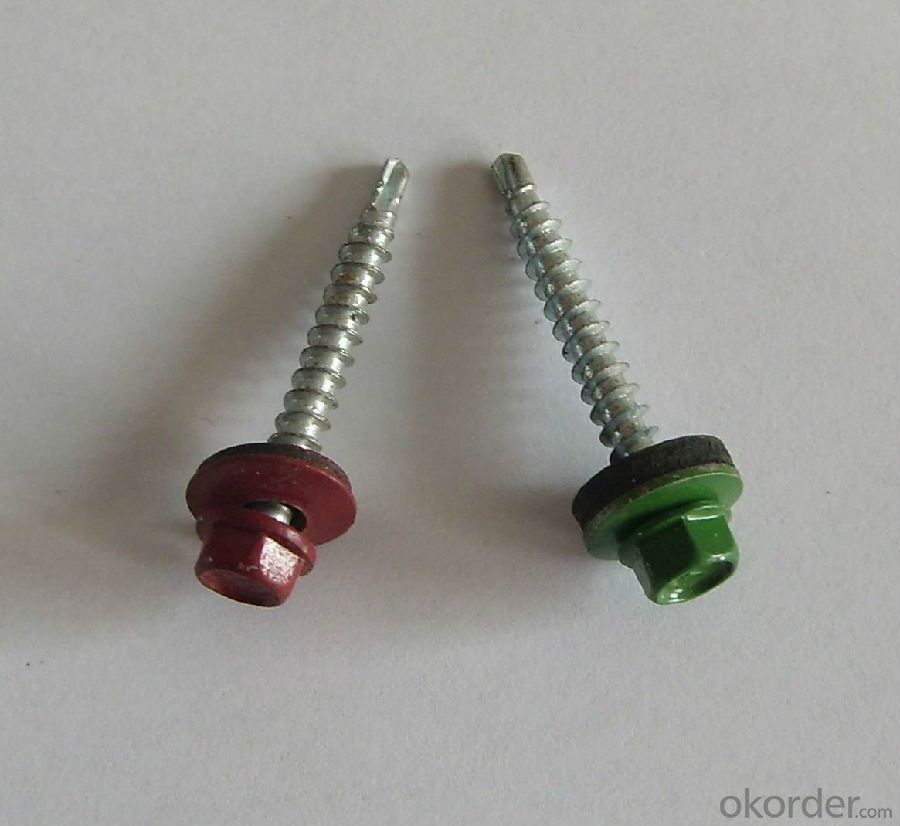 Stainless Steel 316 Self-Tapping Cross Head Screw/Self Tapping Screw/Machine Screw