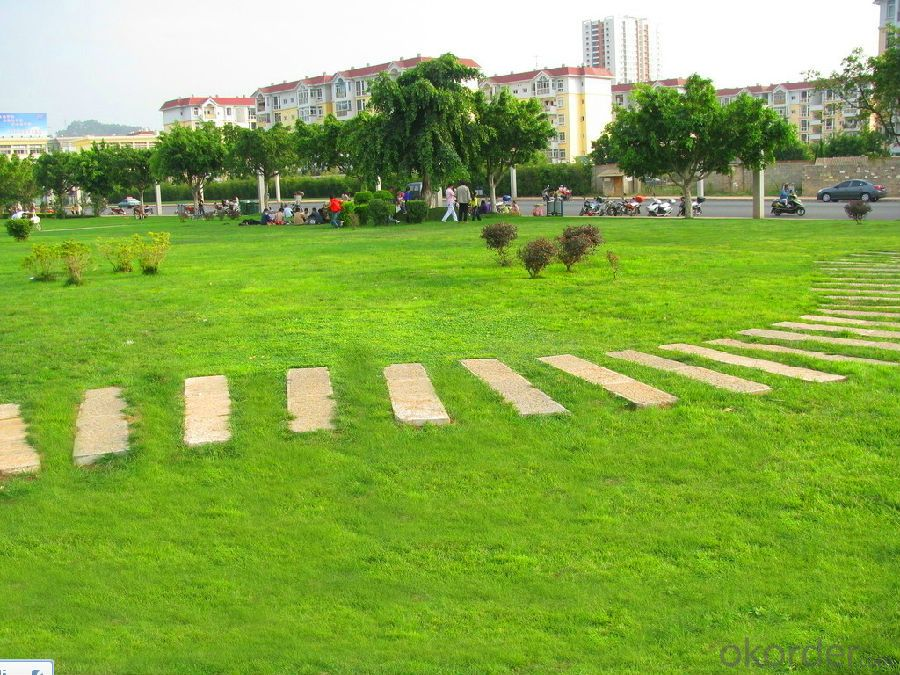 Evergreen Simulation Artificial Grass for Landscape