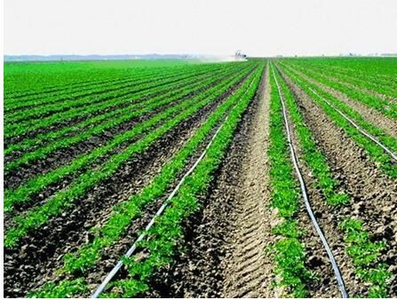 Buy Subsurface And Above Ground Drip Irrigation System Ro