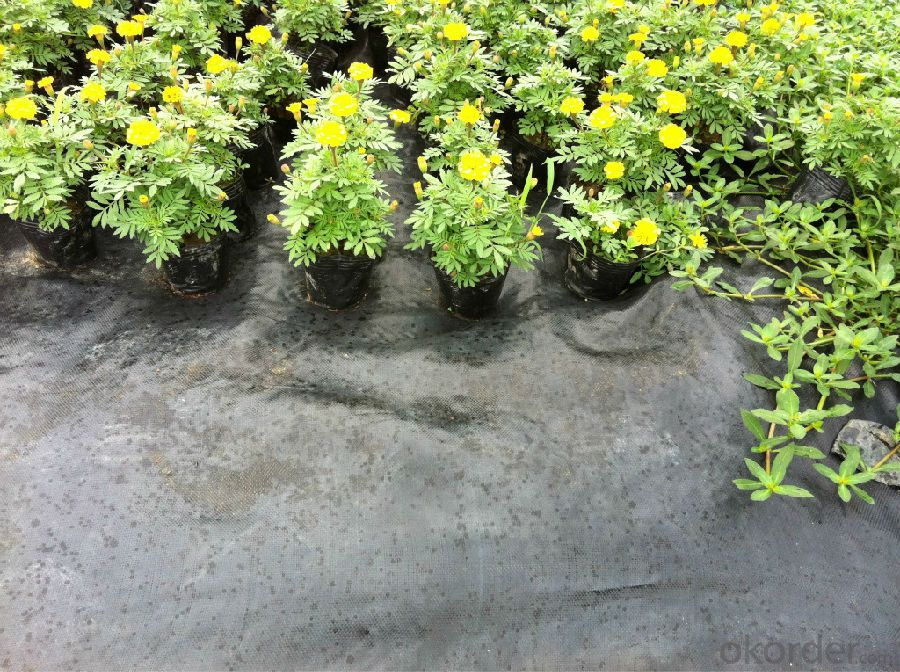Groundcover Fabric for Agriculture/ Landscape / Weed Control