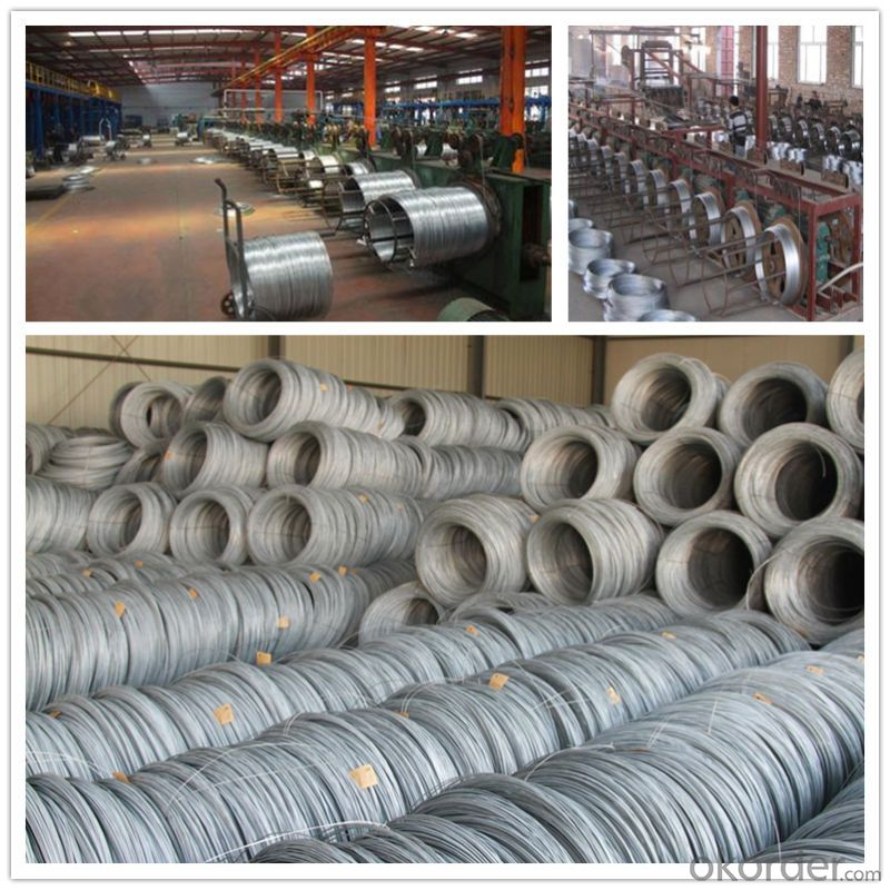 Hot DIP Galvanized Steel Wire for Garden (CZ-W10)