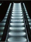 Shopping Mall Automatic Escalator