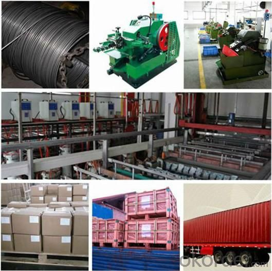 prodution line, packing and delivery