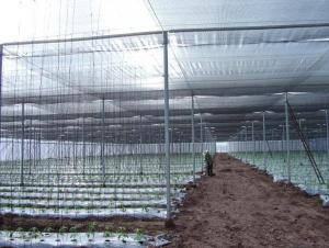 Sunshade Net Black color Tape Filament 90% Shade Factor  for Agriculture