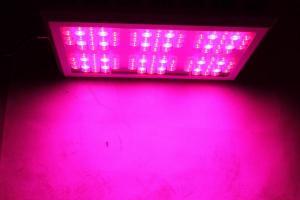 High Quality UV Plant LED Light