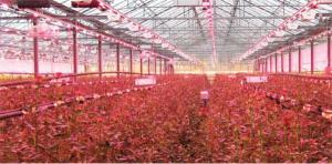 High Quality LED Grow Light