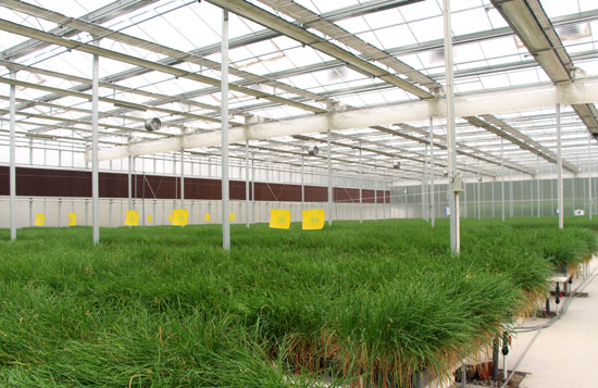 Special Glass Greenhouse  Reflective Glass 5.0-550*400