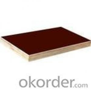 Brown Film Eucalyptus Core Plywood 21mm Thickness