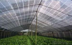 PE Plastic Sunshade Net with Virgin Materials