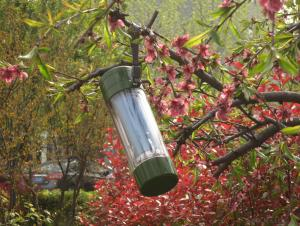 energy saving solar cups