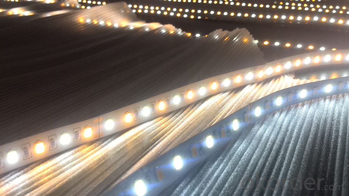 Buy double color smd5630 led stripsamsungepister chip whitewarm double color smd5630 led stripsamsungepister chip whitewarm white led strip mozeypictures Choice Image