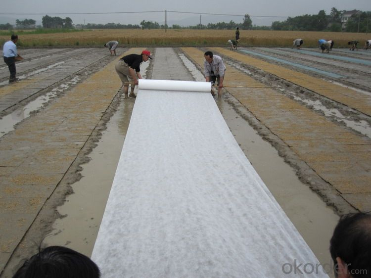 SBS/APP MODIFIED BITUMEN WATERPROOFING