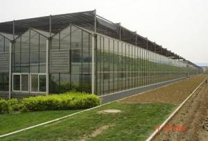 Pepper plastic film greenhouse for tropic area