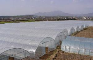 Plastic film greenhouse/Vegetable greenhouse