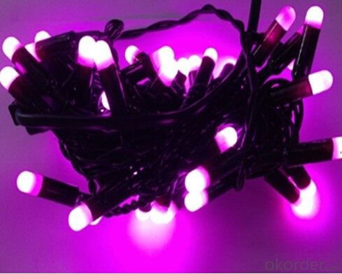 110V Or 220V IP65 Christmas Rice Light LED Holiday Lighting