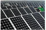 Paneles Solares de 260W CNBM de China.