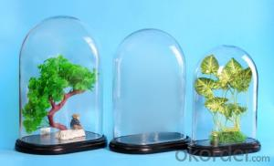 Clear Glass Bell Jars Glass Dome glass domes