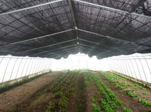 New Professional Product Transparency Agriculture Material