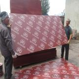 Phenolic Coated Plywood Film Faced Plywood