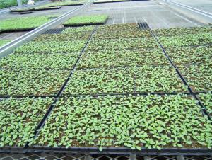 Nursery Seeding Tray  HIPS Seed Tray Plastic Tray