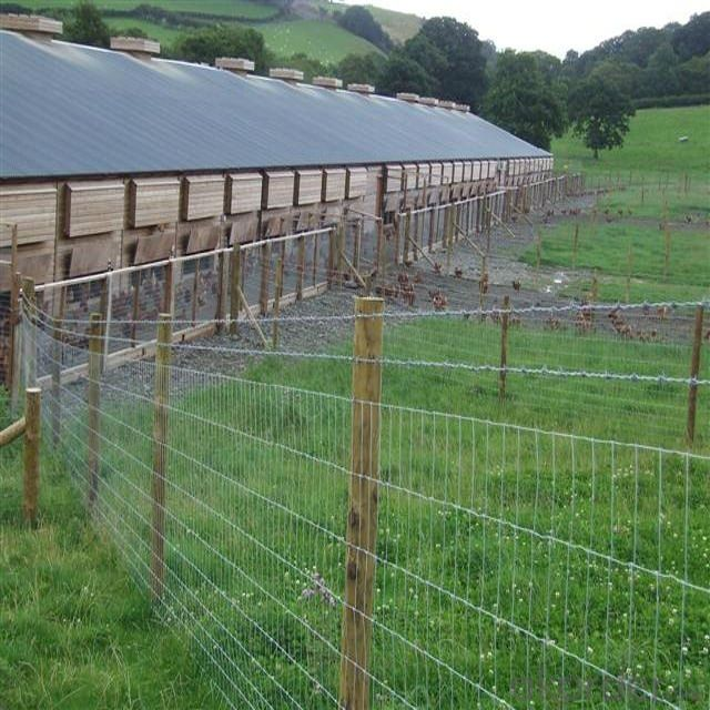 Cheap Hot Sale Hot-Dipped Galvanized Field Fence (Factory Price And ISO9001-2008)