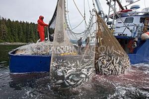 100% Nylon Monofilament Fishing Net to Africa