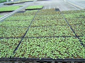 Greenhouse Usage Plug Trays (Growing and Seedling) HIPS Made Plastic