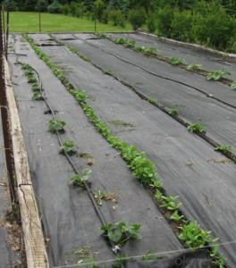 Polypropylene Woven Fabric/Weed Barrier Fabric for Agriculture