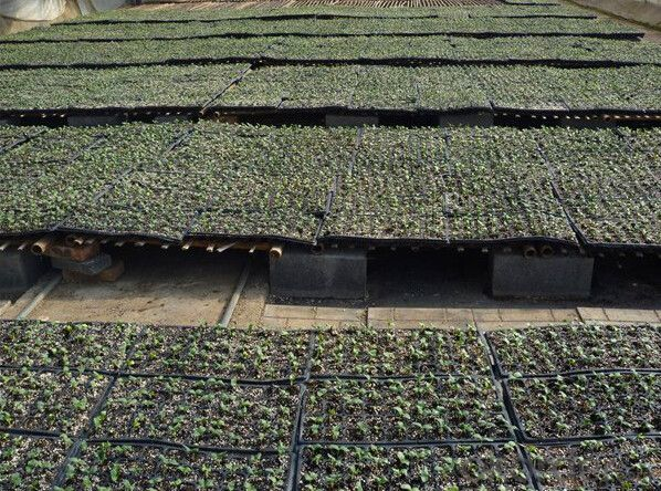 128 Cell Durable Seed Plug Trays for Agriculture
