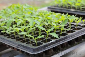 50 Cell Plastic PS Biodegradable Seed Tray Cell Plug Tray