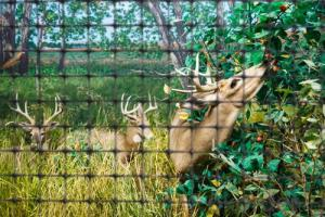 PP Plastic Netting/ Deer Netting for Animals