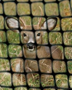 PP Plastic/Deer Netting/Garden Netting for Animal