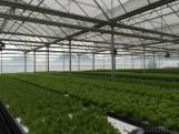 Large-scale High Yield Vegetable Plant Factory