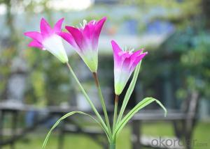 Solar Lily Flower Light for Garden Decoration, Solar Flower Lights for Christmas Decoration