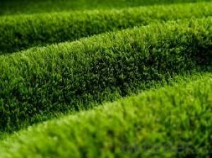 Artificial Grass Carpet with Cheap Price