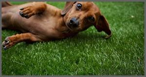 Artficical grass/High  quality  raw  material   for  pets